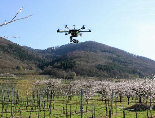 Luftbildvideo Marillenblüte Wachau
