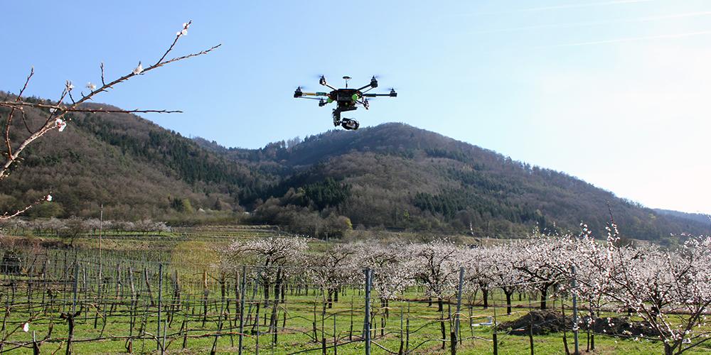 Luftbildaufnahme AIRinspector:: Marillenblüte Wachu